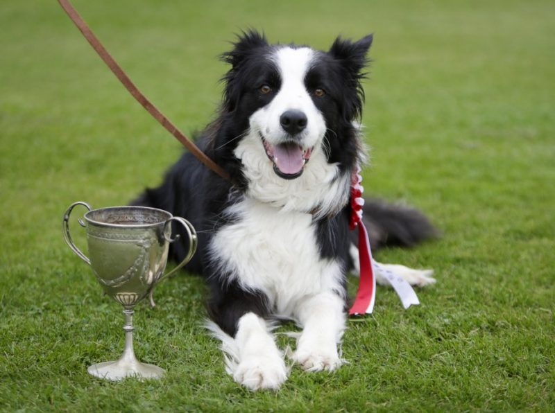 Paw-some Hailey Dog Show raises £1,000 for charity