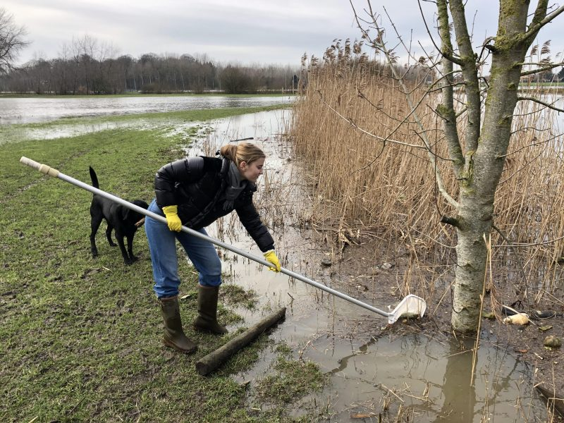 All washed up: Haileybury pupils collect litter from Belgian river